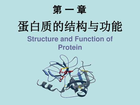 Structure and Function of Protein