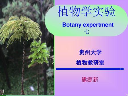 植物学实验 Botany expertment 七
