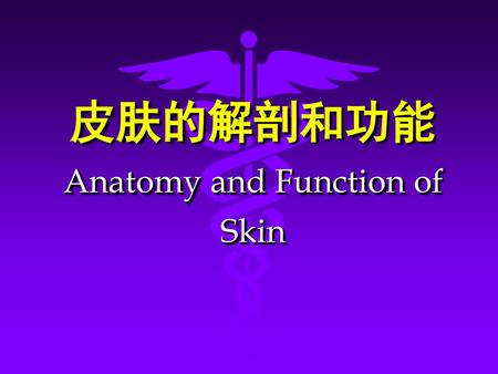 皮肤的解剖和功能 Anatomy and Function of Skin