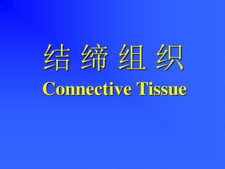 结 缔 组 织 Connective Tissue.
