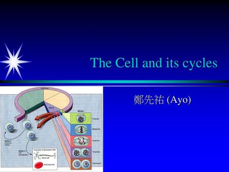 The Cell and its cycles 鄭先祐 (Ayo).
