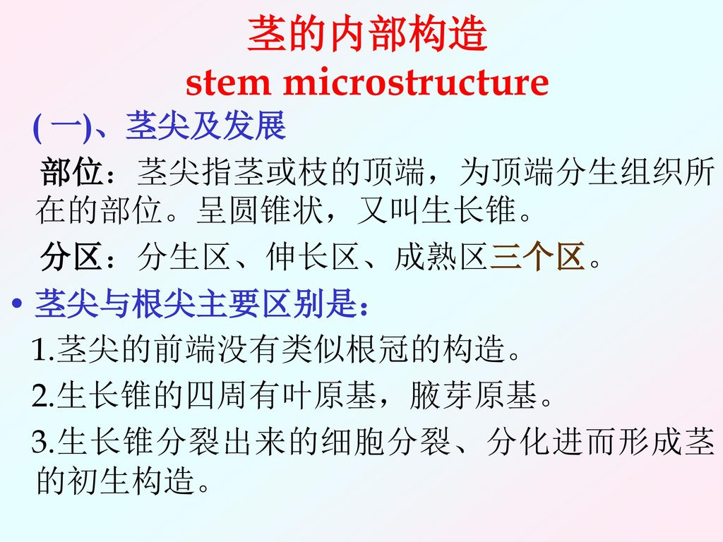 茎的内部构造 stem microstructure