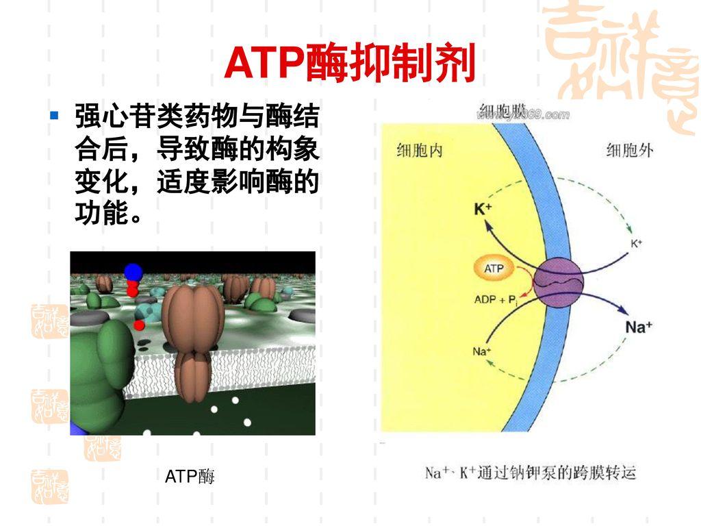 ATP酶抑制剂 强心苷类药物与酶结合后,导致酶的构象变化,适度影响酶的功能。 ATP酶