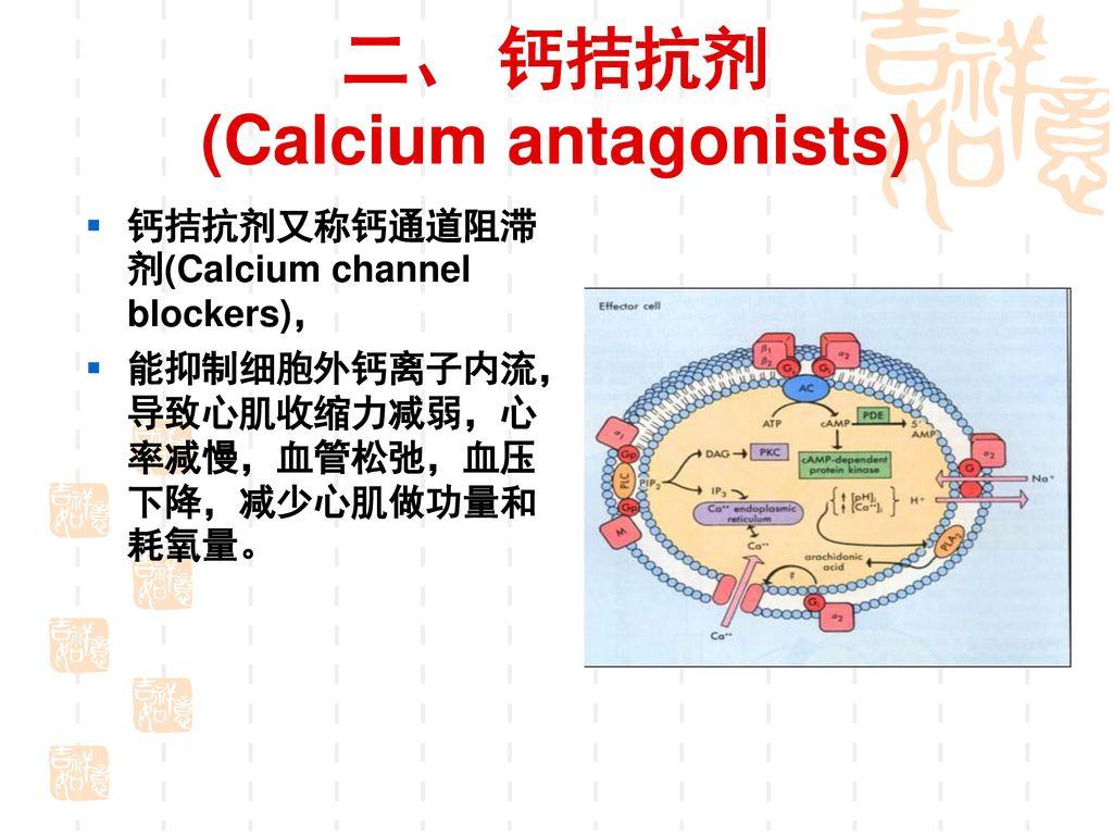 二、 钙拮抗剂 (Calcium antagonists)