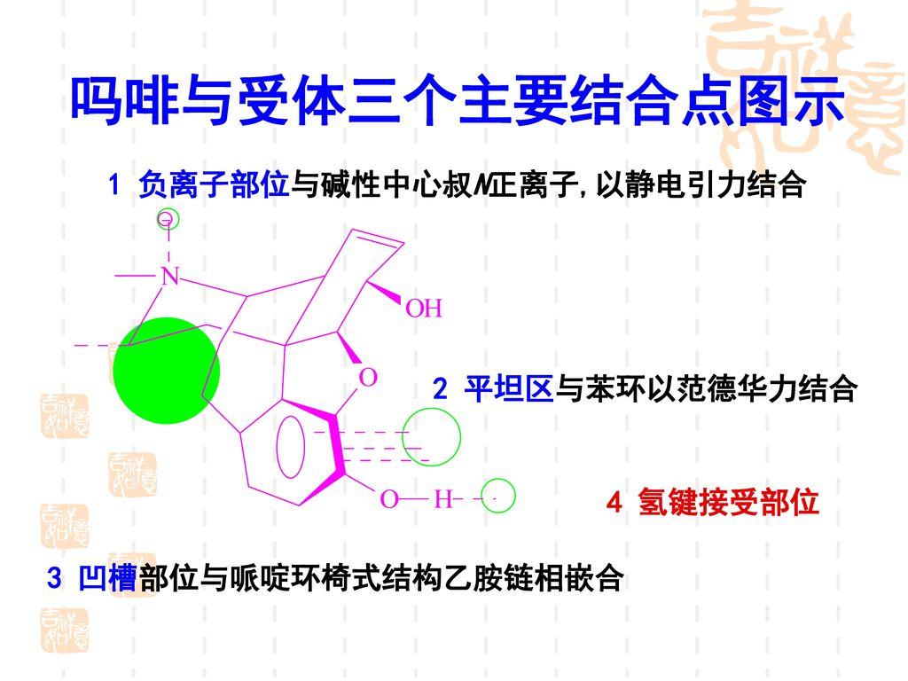 吗啡与受体三个主要结合点图示 1 负离子部位与碱性中心叔N正离子,以静电引力结合 2 平坦区与苯环以范德华力结合 4 氢键接受部位