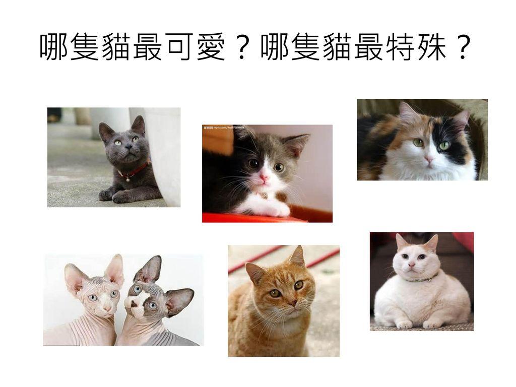 哪隻貓最可愛?哪隻貓最特殊?