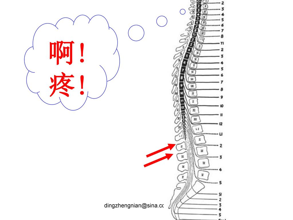 l1/2蛛网膜下腔穿刺,位于脊髓圆锥之上的机会超过10%.….