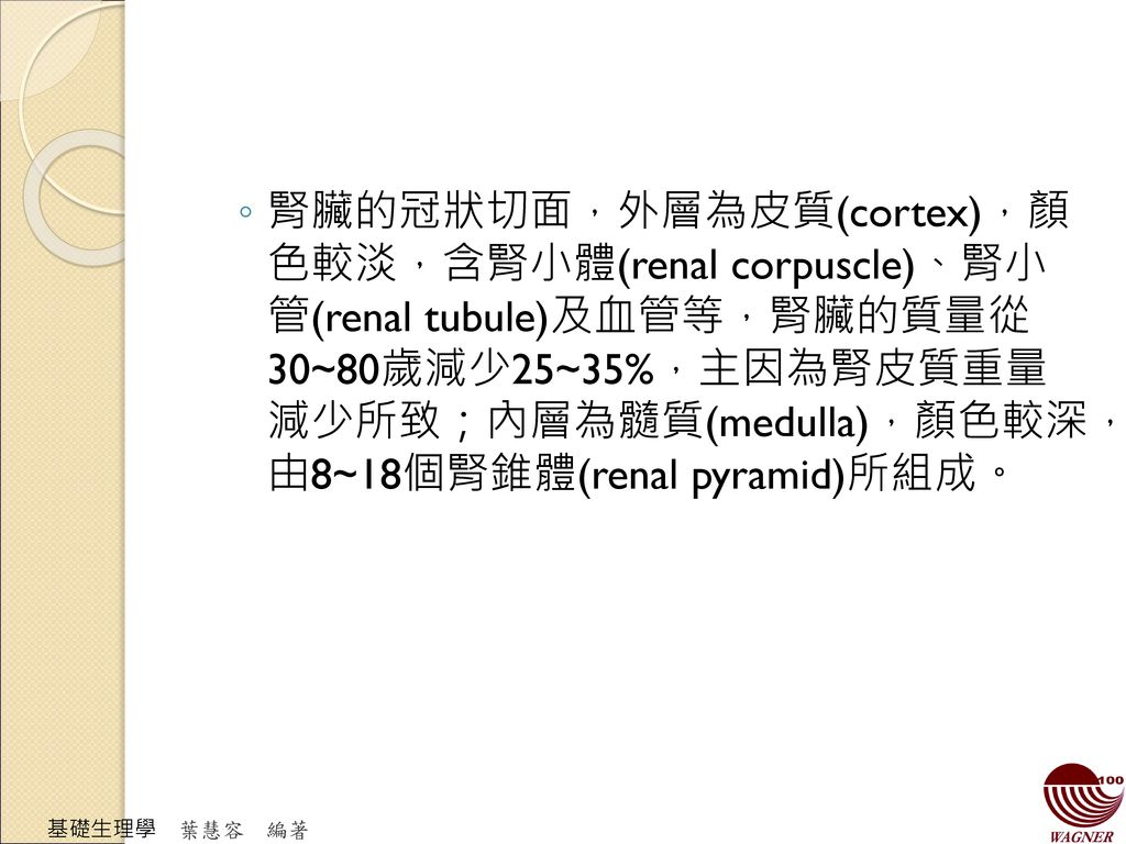 腎臟的冠狀切面,外層為皮質(cortex),顏 色較淡,含腎小體(renal corpuscle)、腎小 管(renal tubule)及血管等,腎臟的質量從 30~80歲減少25~35%,主因為腎皮質重量 減少所致;內層為髓質(medulla),顏色較深, 由8~18個腎錐體(renal pyramid)所組成。