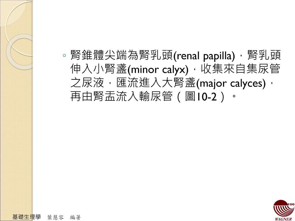 腎錐體尖端為腎乳頭(renal papilla),腎乳頭 伸入小腎盞(minor calyx),收集來自集尿管 之尿液,匯流進入大腎盞(major calyces), 再由腎盂流入輸尿管(圖10-2)。