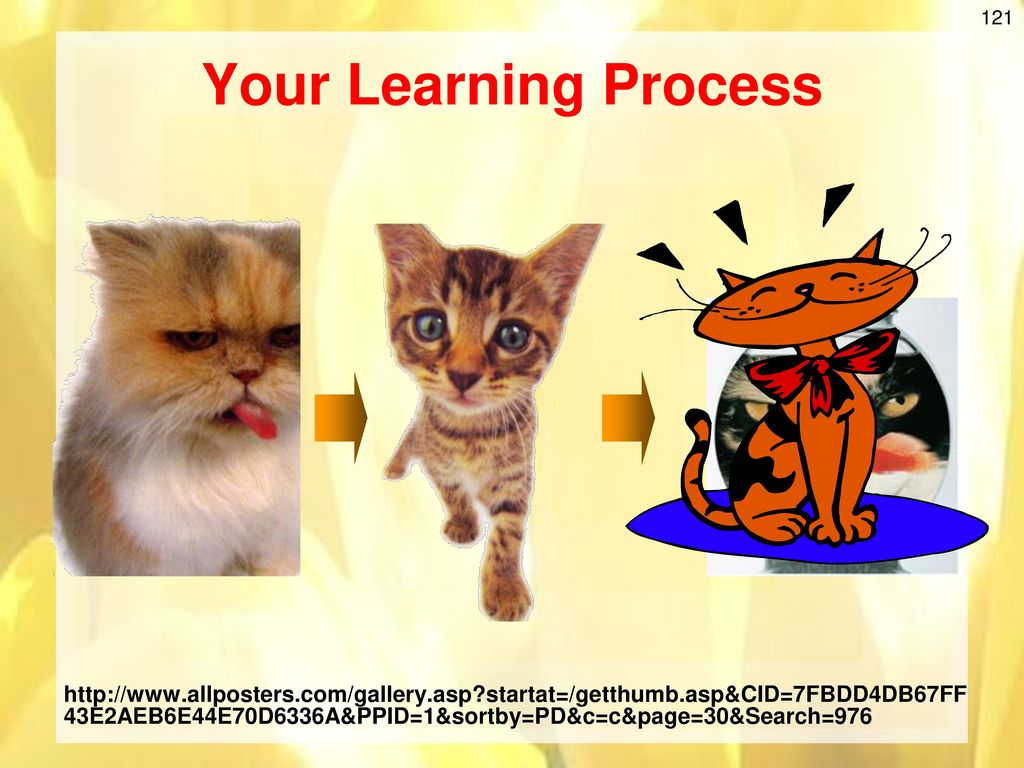 Your Learning Process