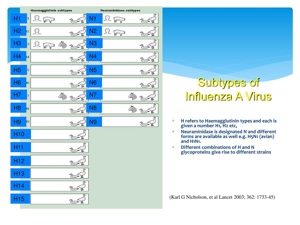 Subtypes of Influenza A Virus