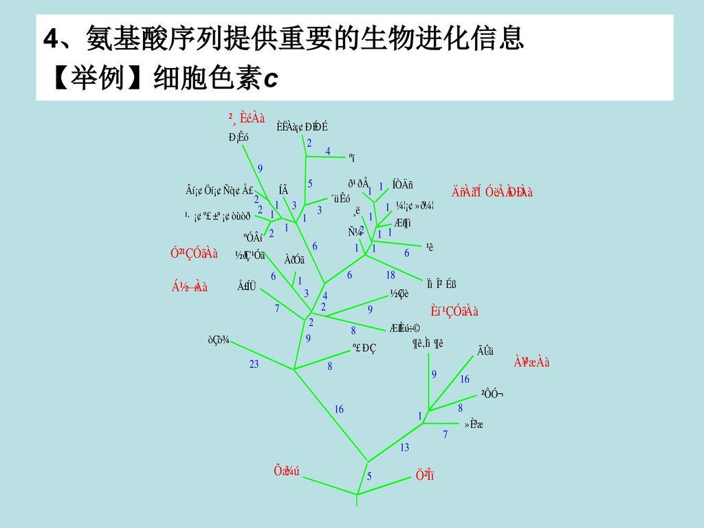 4、氨基酸序列提供重要的生物进化信息 【举例】细胞色素c