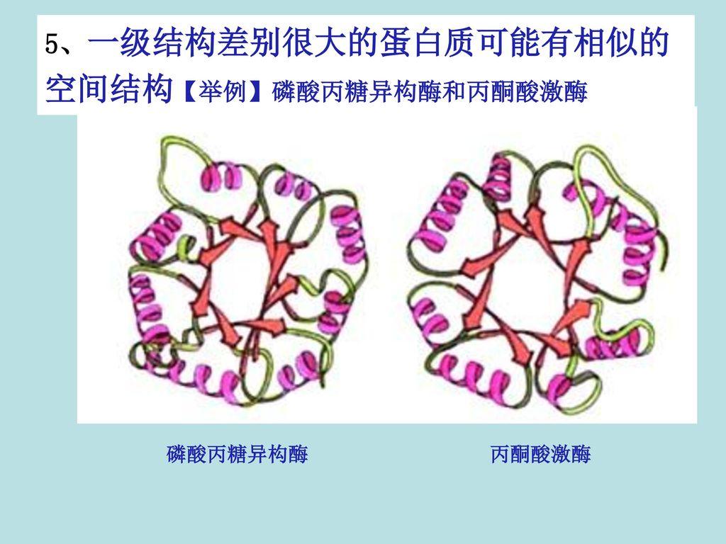 5、一级结构差别很大的蛋白质可能有相似的空间结构【举例】磷酸丙糖异构酶和丙酮酸激酶