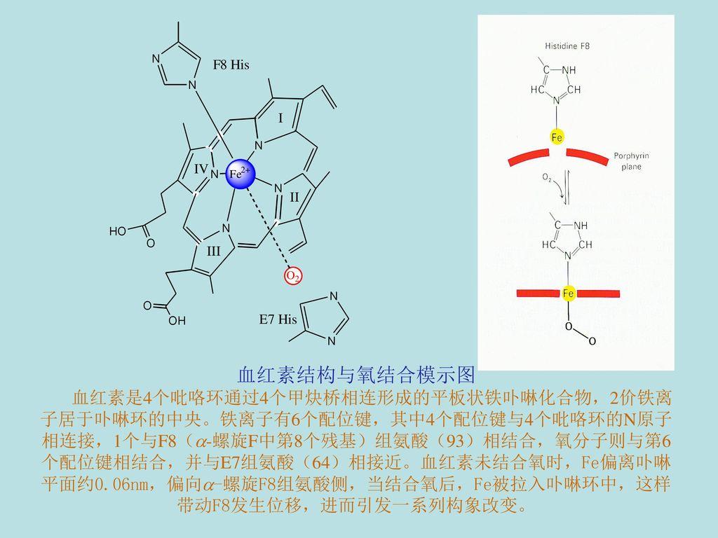 血红素结构与氧结合模示图