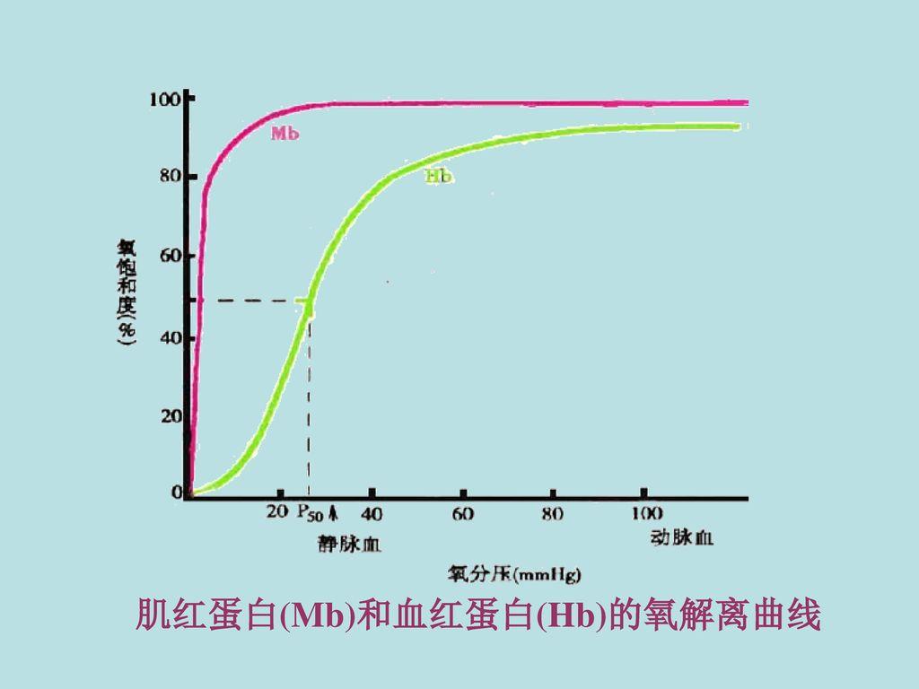 肌红蛋白(Mb)和血红蛋白(Hb)的氧解离曲线