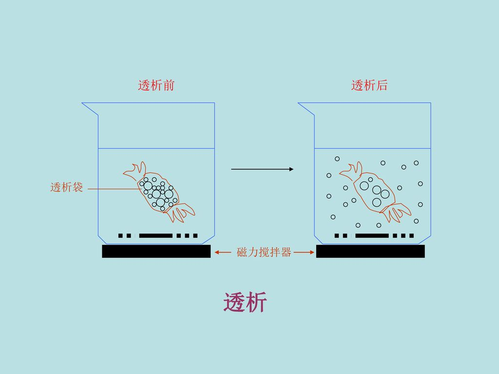 磁力搅拌器 透析前 透析后 透析袋 透析