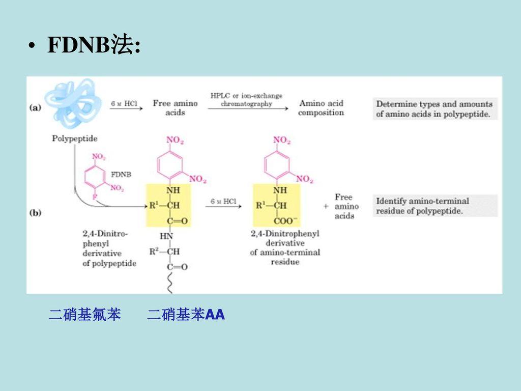 FDNB法: 二硝基氟苯 二硝基苯AA