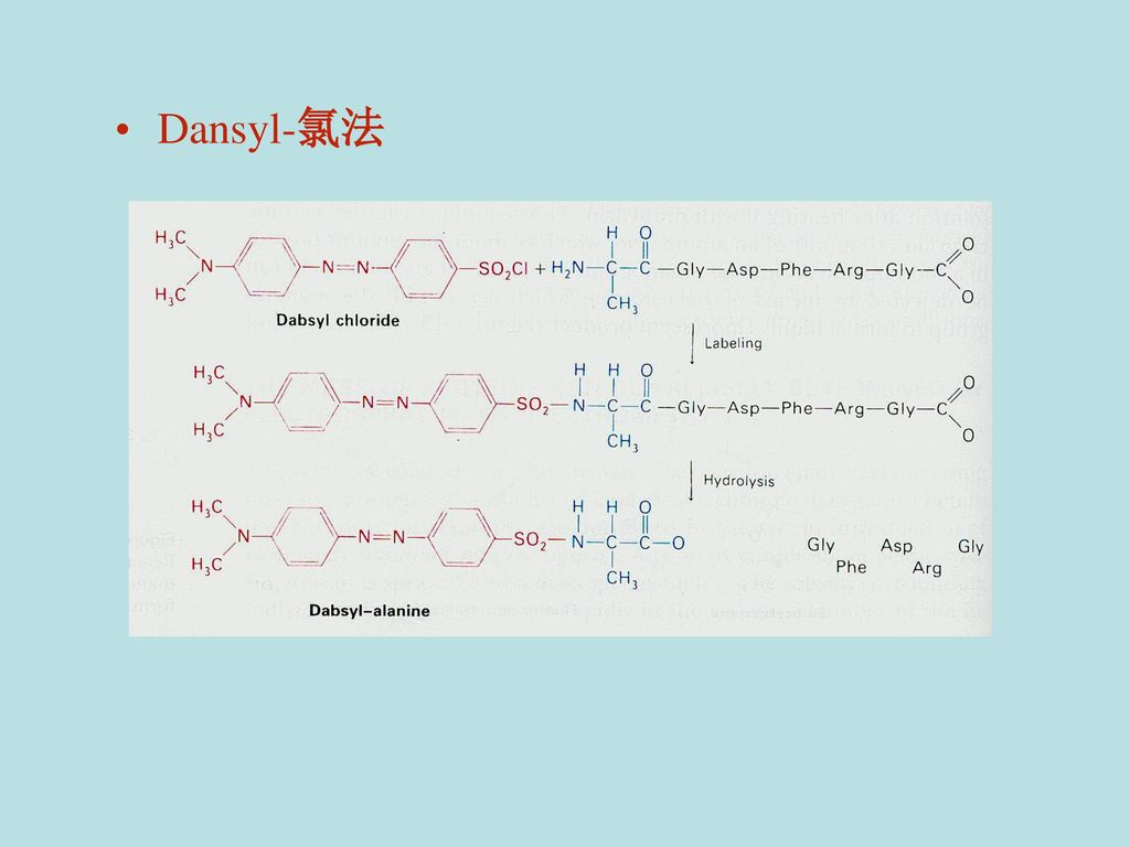 Dansyl-氯法