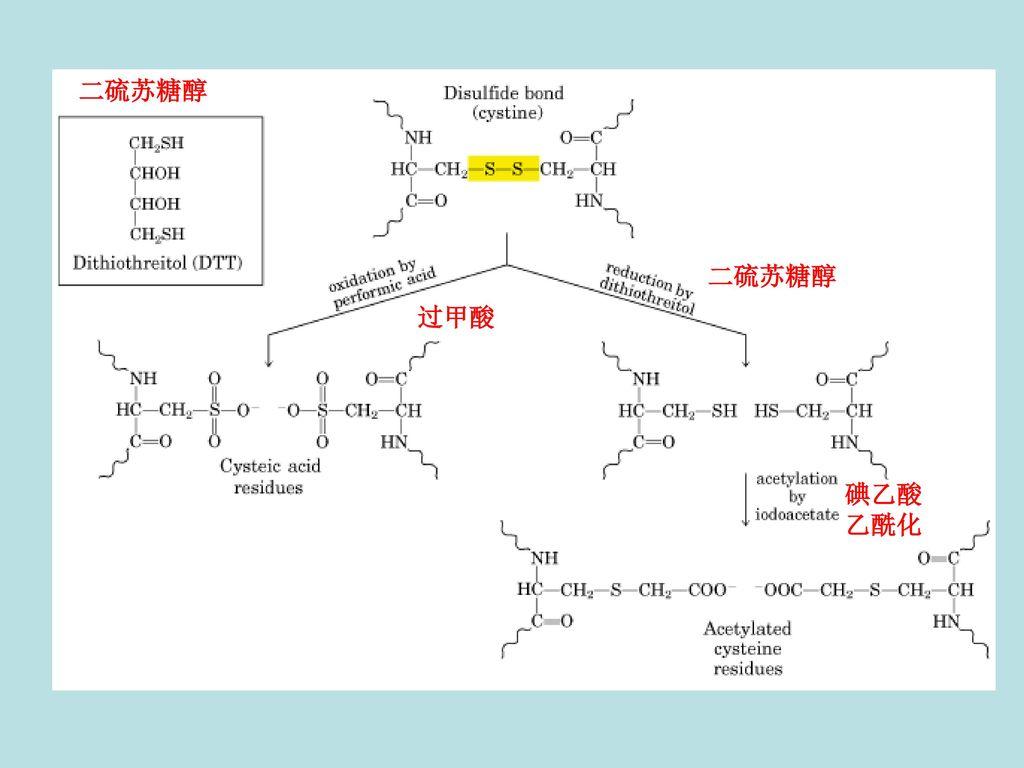 二硫苏糖醇 二硫苏糖醇 过甲酸 碘乙酸 乙酰化