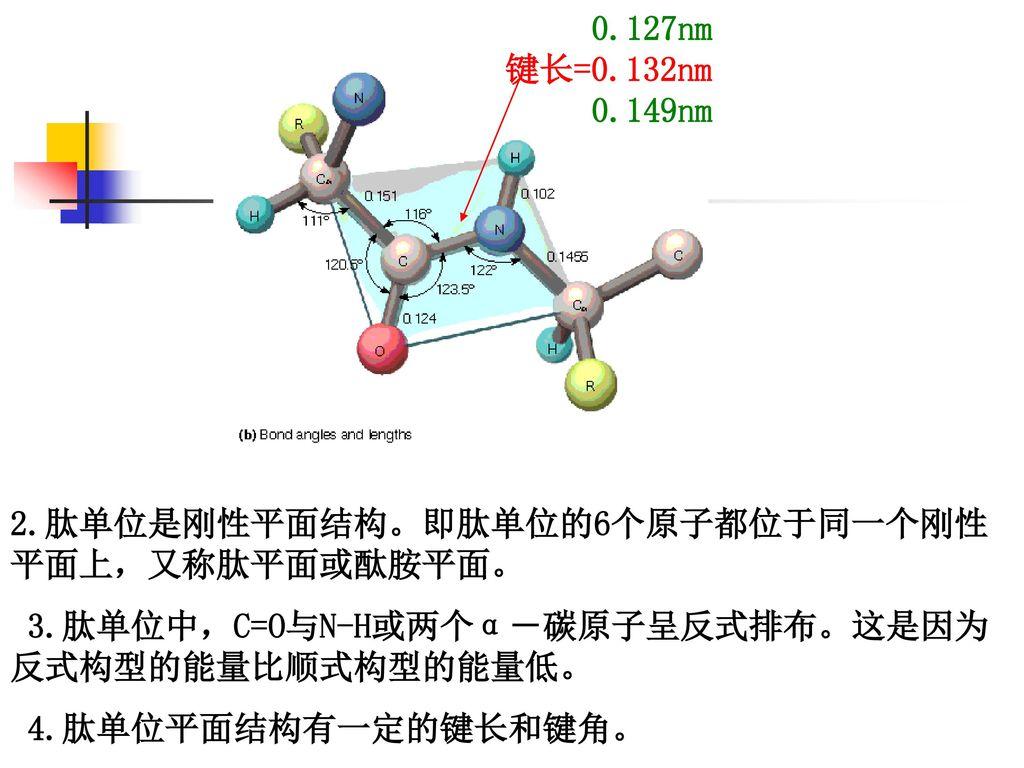 0.127nm 键长=0.132nm. 0.149nm. 2.肽单位是刚性平面结构。即肽单位的6个原子都位于同一个刚性平面上,又称肽平面或酞胺平面。 3.肽单位中,C=O与N-H或两个α-碳原子呈反式排布。这是因为反式构型的能量比顺式构型的能量低。