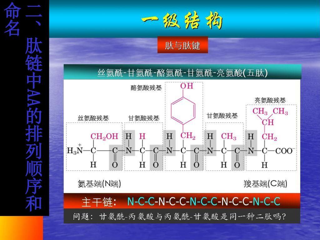 二、肽链中AA的排列顺序和命名