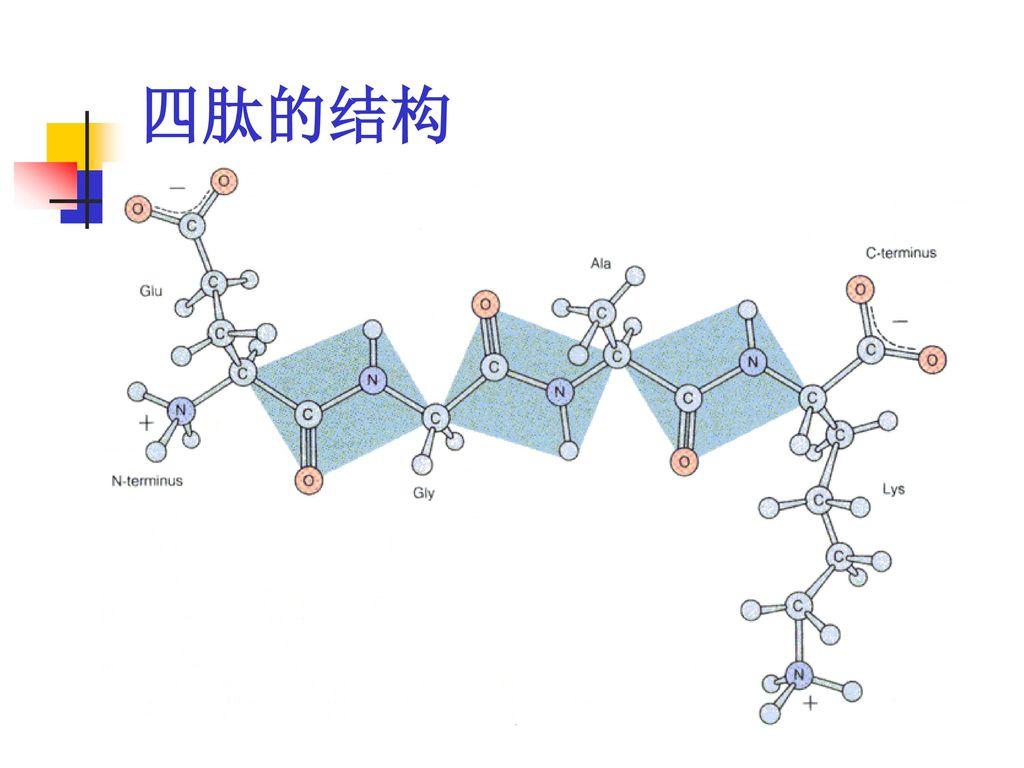 四肽的结构