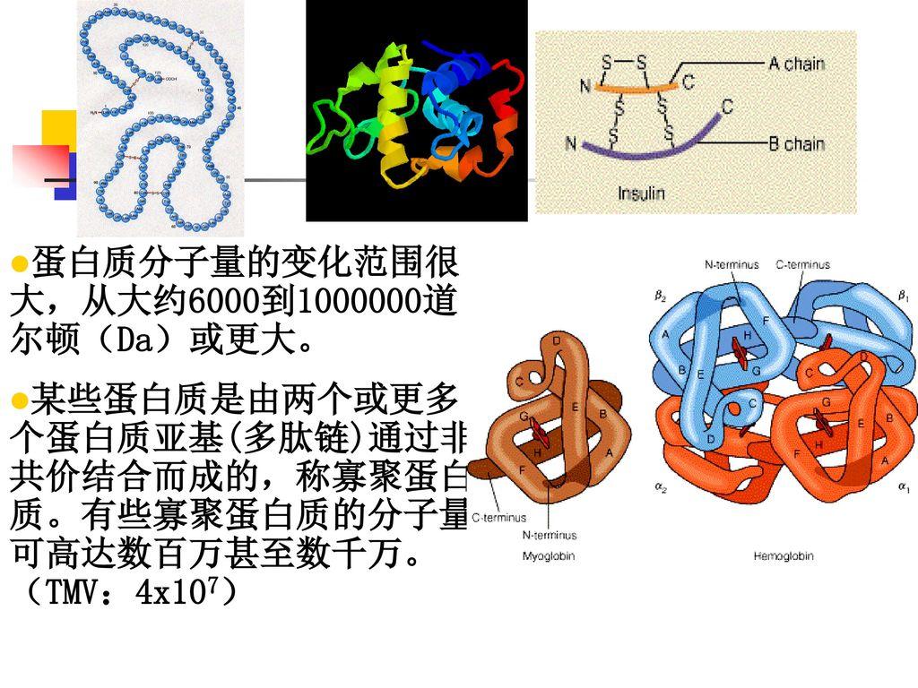 蛋白质分子量的变化范围很大,从大约6000到1000000道尔顿(Da)或更大。