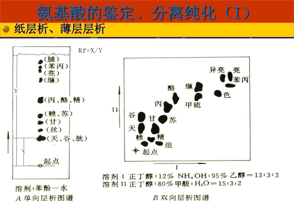 氨基酸的鉴定、分离纯化(I) 纸层析、薄层层析