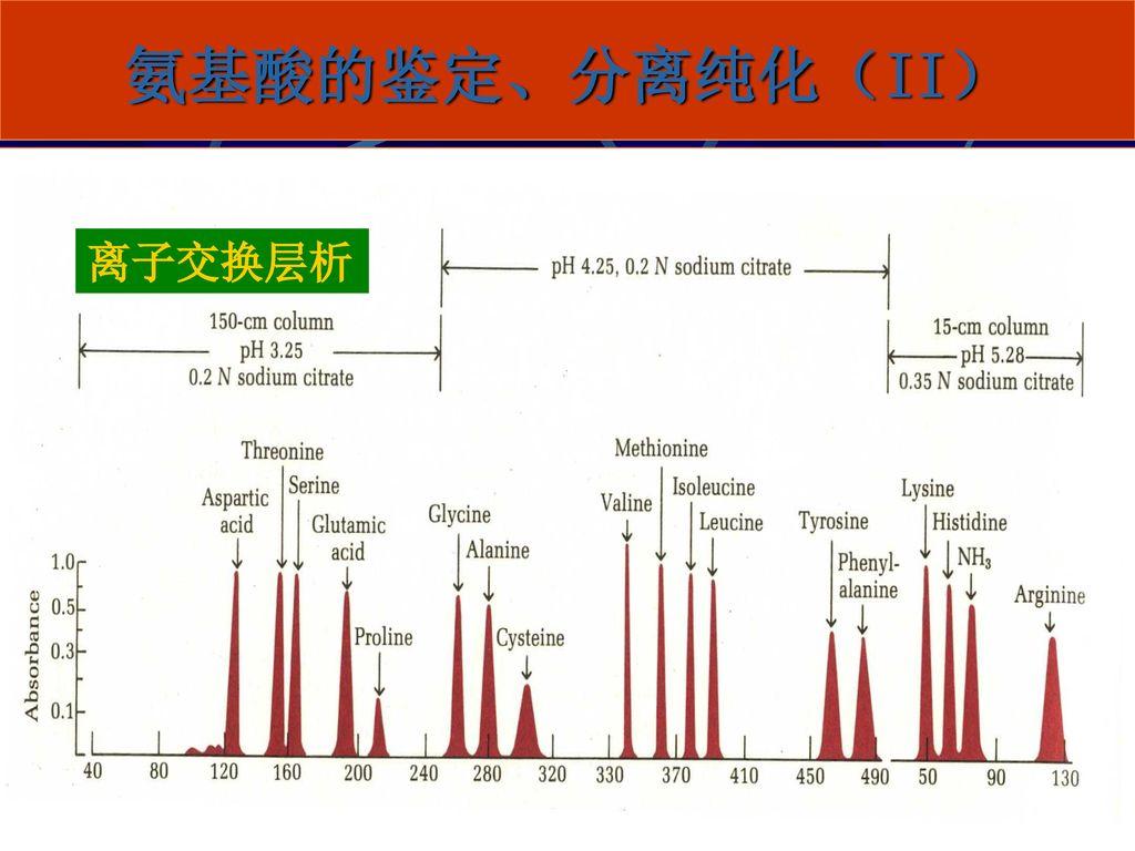 氨基酸的鉴定、分离纯化(II) 离子交换层析