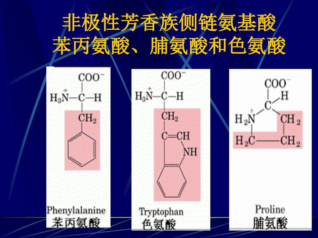 非极性芳香族侧链氨基酸 苯丙氨酸、脯氨酸和色氨酸
