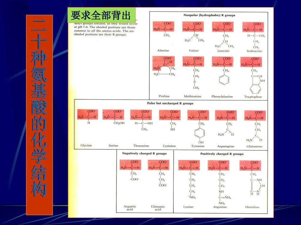 要求全部背出 二十种氨基酸的化学结构