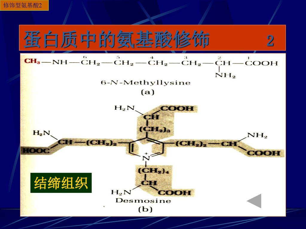 修饰型氨基酸2 蛋白质中的氨基酸修饰 2 结缔组织
