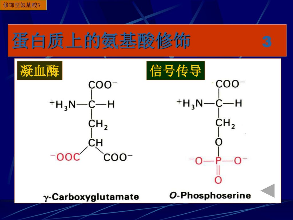 修饰型氨基酸3 蛋白质上的氨基酸修饰 3 凝血酶 信号传导