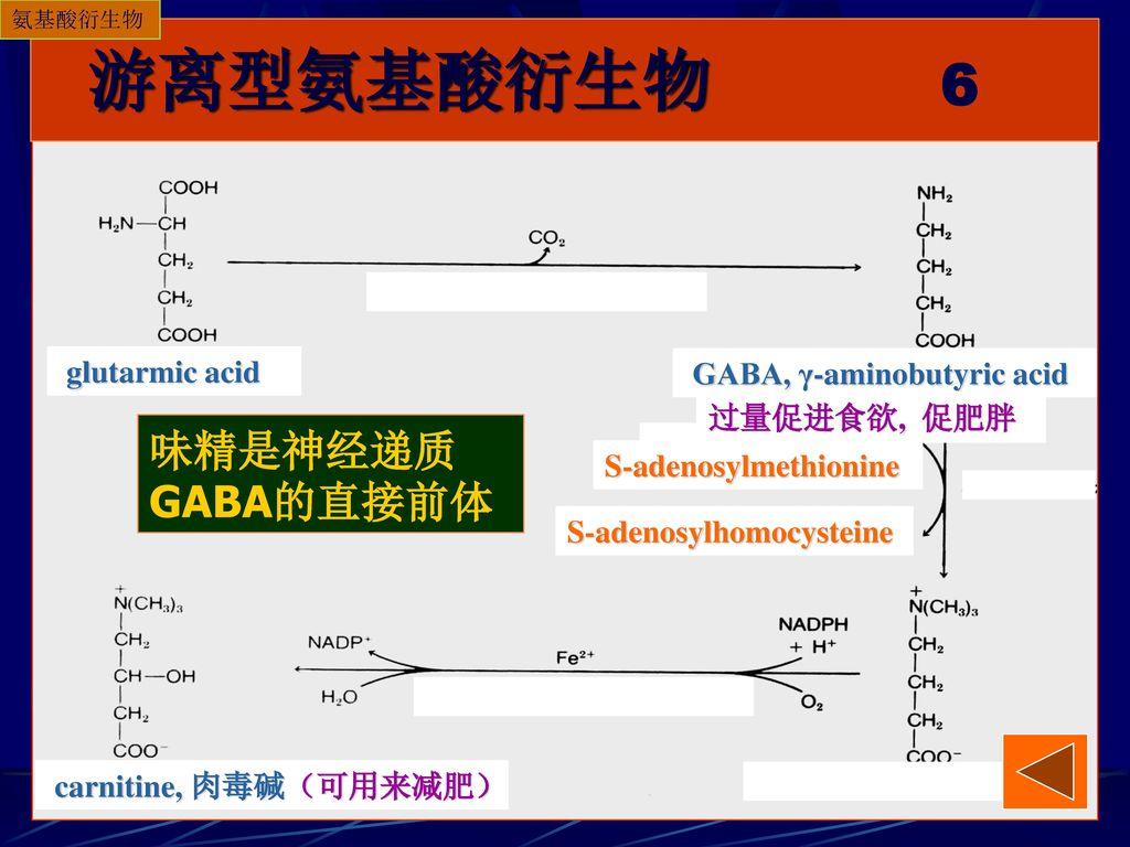 游离型氨基酸衍生物 6 味精是神经递质GABA的直接前体 glutarmic acid GABA, γ-aminobutyric acid