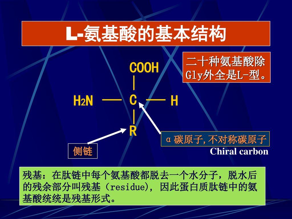L-氨基酸的基本结构 COOH H2N C H R 二十种氨基酸除Gly外全是L-型。 α碳原子,不对称碳原子 侧链