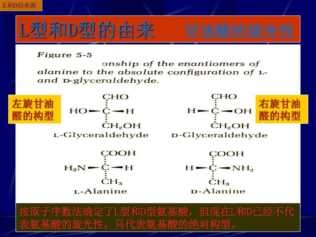 L型和D型的由来 甘油醛的旋光性 左旋甘油醛的构型 右旋甘油醛的构型