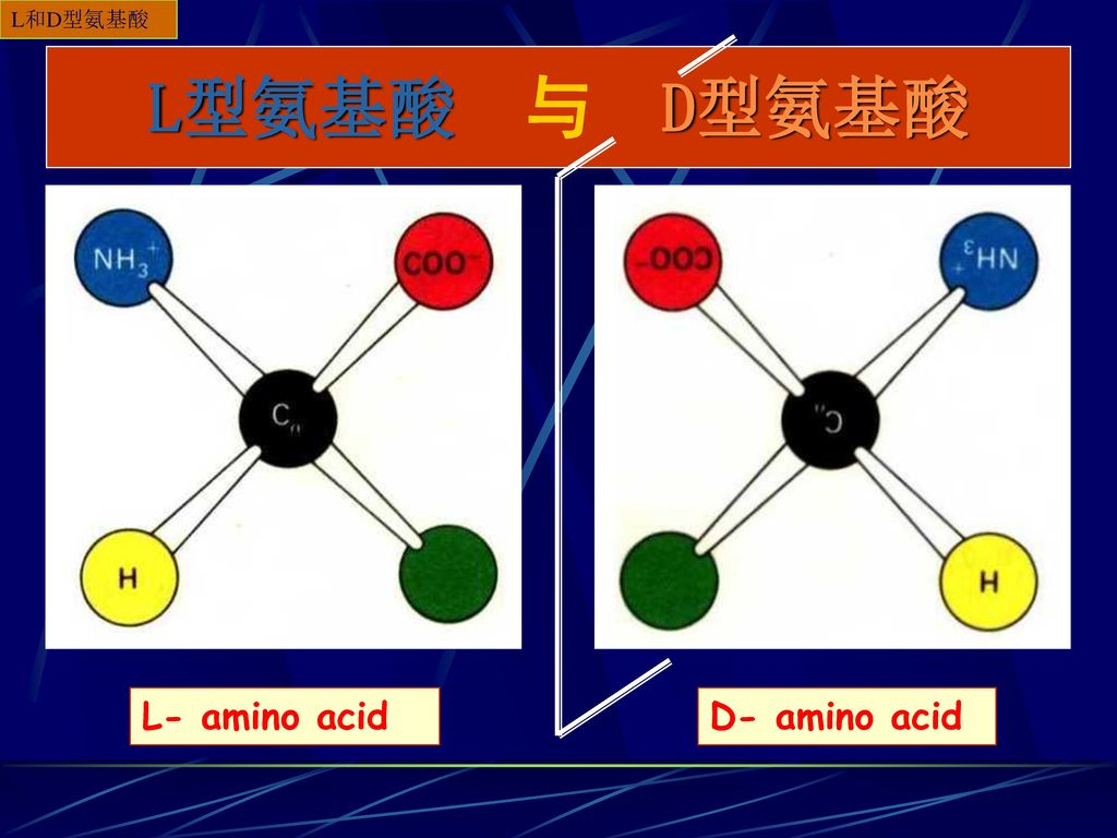 L和D型氨基酸 L型氨基酸 与 D型氨基酸 L- amino acid D- amino acid