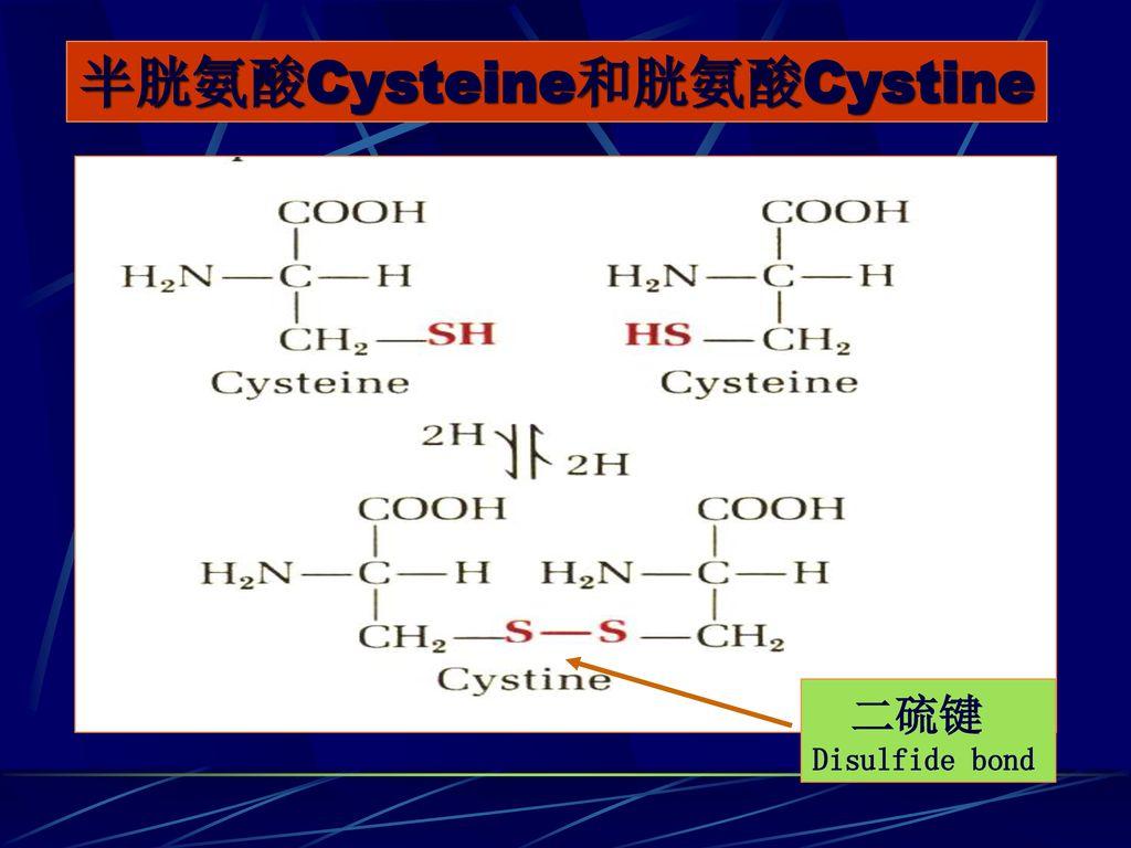 半胱氨酸Cysteine和胱氨酸Cystine