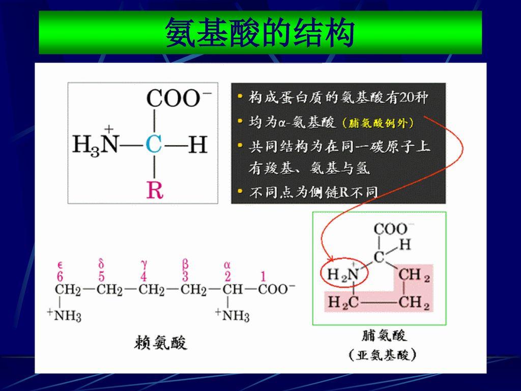 氨基酸的结构