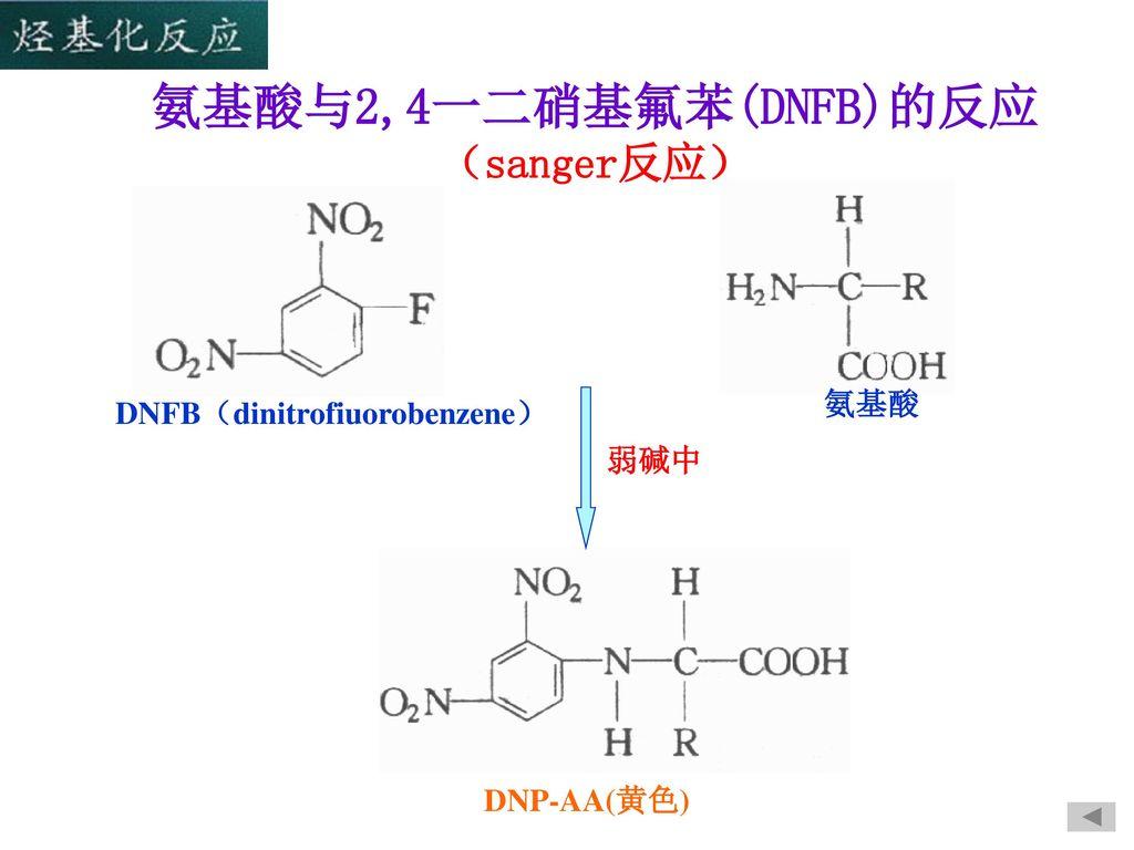 氨基酸与2,4一二硝基氟苯(DNFB)的反应 (sanger反应)