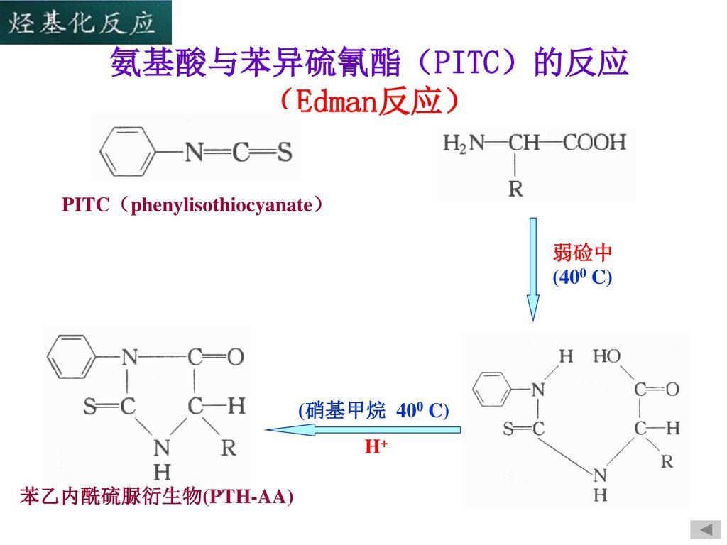 氨基酸与苯异硫氰酯(PITC)的反应 (Edman反应)
