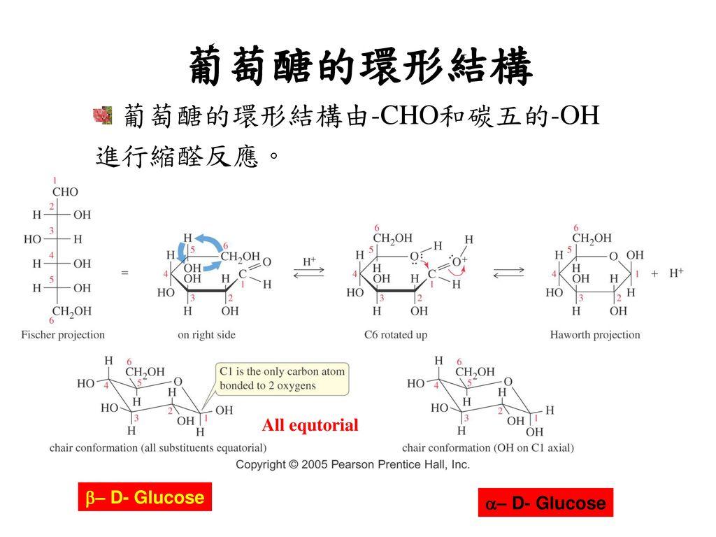 葡萄醣的環形結構 葡萄醣的環形結構由-CHO和碳五的-OH 進行縮醛反應。 All equtorial b– D- Glucose