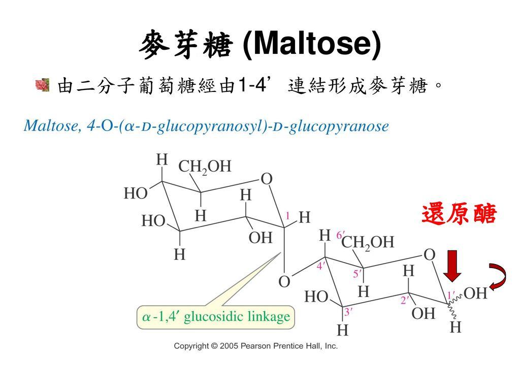 麥芽糖 (Maltose) 由二分子葡萄糖經由1-4'連結形成麥芽糖。 還原醣
