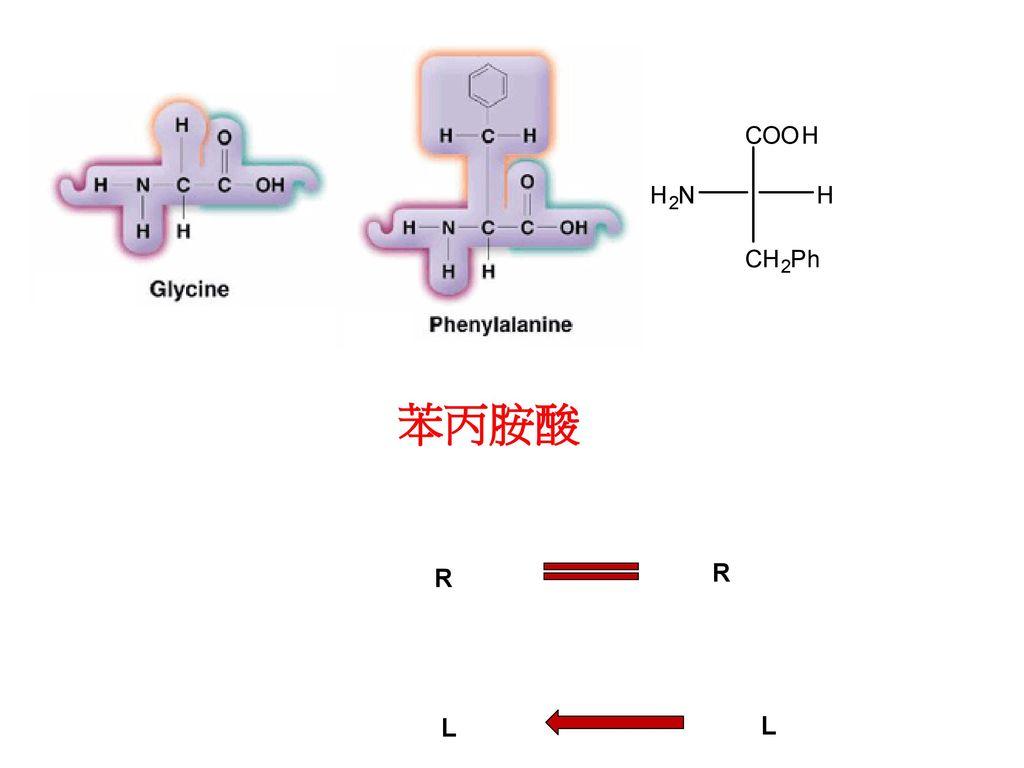 苯丙胺酸 R R L L