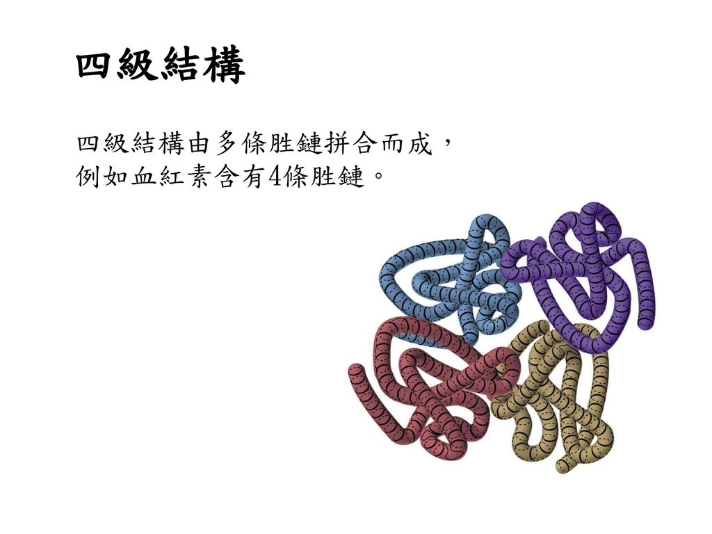四級結構 四級結構由多條胜鏈拼合而成, 例如血紅素含有4條胜鏈。