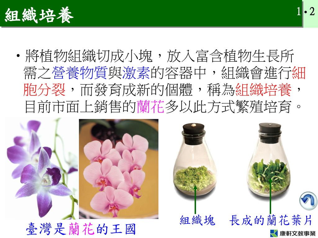 組織培養 將植物組織切成小塊,放入富含植物生長所需之營養物質與激素的容器中,組織會進行細胞分裂,而發育成新的個體,稱為組織培養,目前市面上銷售的蘭花多以此方式繁殖培育。 組織塊. 長成的蘭花葉片.