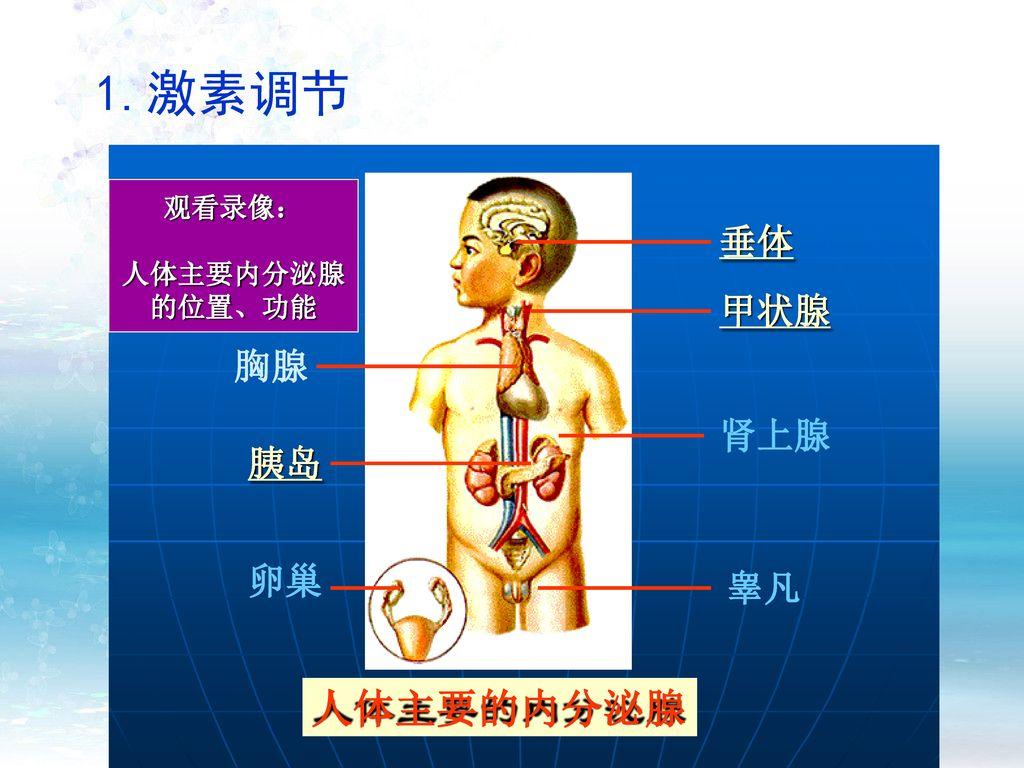 1.激素调节