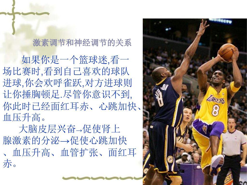 激素调节和神经调节的关系 如果你是一个篮球迷,看一场比赛时,看到自己喜欢的球队进球,你会欢呼雀跃,对方进球则让你捶胸顿足.尽管你意识不到,你此时已经面红耳赤、心跳加快、血压升高。 大脑皮层兴奋→促使肾上.