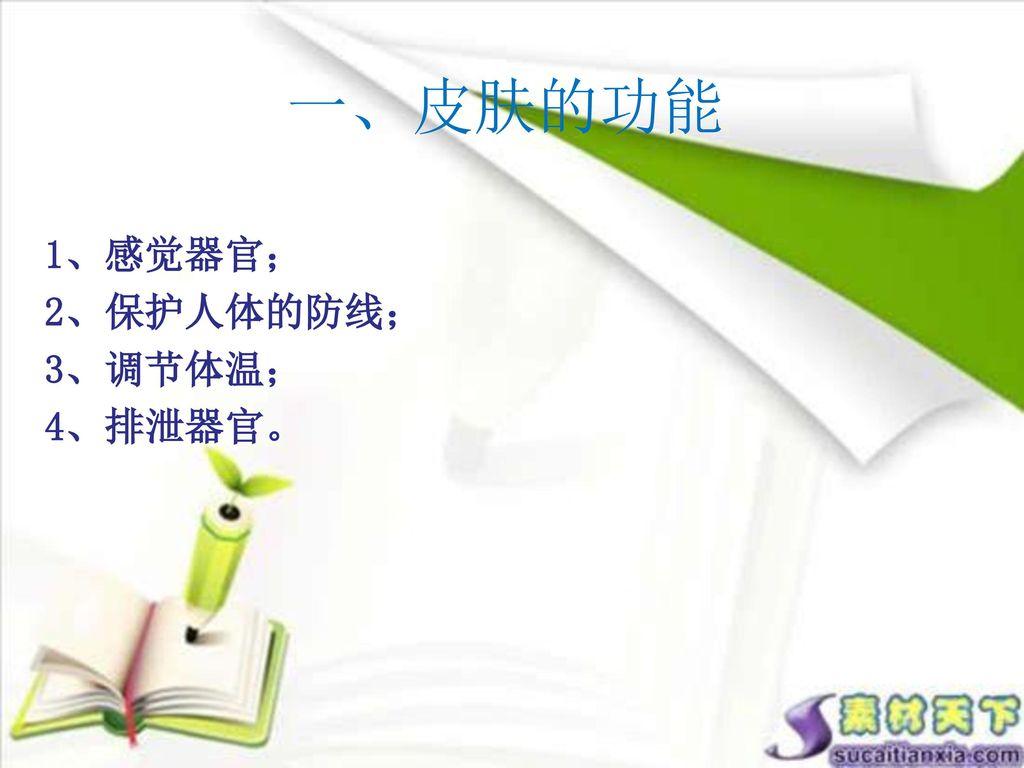 一、皮肤的功能 1、感觉器官; 2、保护人体的防线; 3、调节体温; 4、排泄器官。