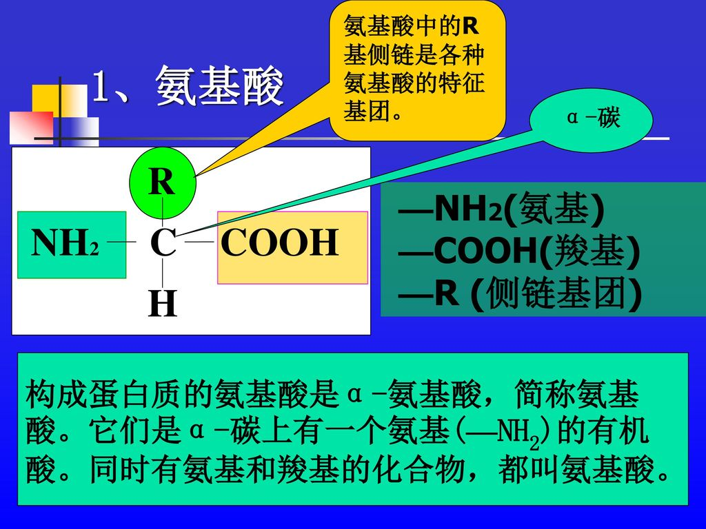 1、氨基酸 R C H COOH NH2 —NH2(氨基) —COOH(羧基) —R (侧链基团) 构成蛋白质的氨基酸是α-氨基酸,简称氨基